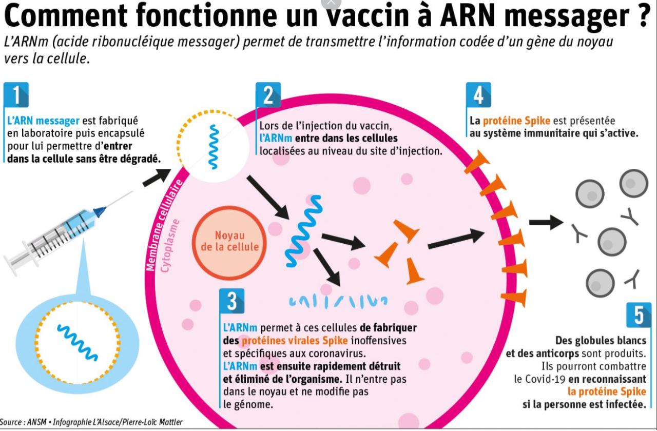 Schéma expliquant le fonctionnement d'un vaccin ARN messager